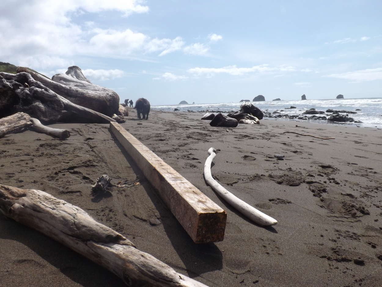 Lumber building material or r 39 s marine debris program for Beach house construction materials