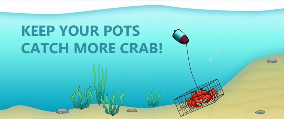 """An illustrated image of a crab in a crab pot with the words """"keep your pots, catch more crab!""""."""