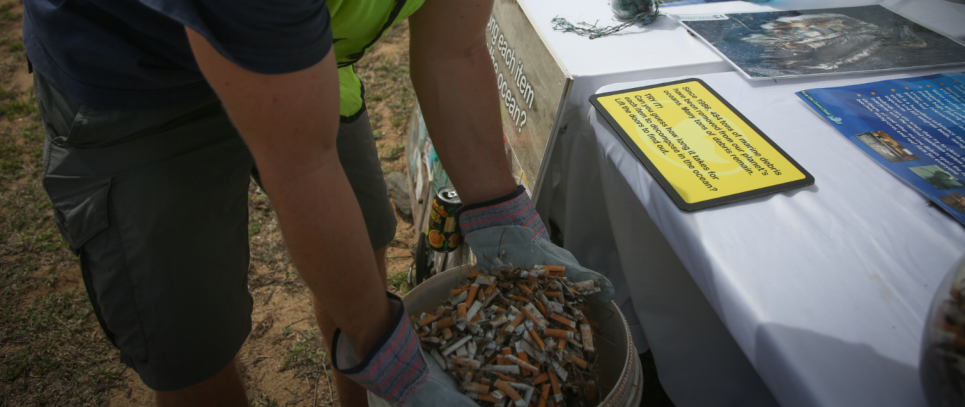 Someone holding a lot of littered cigarettes.