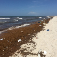 A beach littered with plastic debris. (Photo Credit: Dauphin Island Sea Lab)