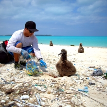 A Marine Debris team member disentangling a Laysan Albatross chick from a small derelict fishing net. (Photo credit: NOAA CREP)