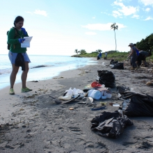 A volunteer records data on a beach in Puerto Rico.