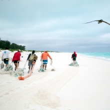 The Marine Debris team removing derelict fishing nets from North Beach, Sand Island, Midway Atoll. (Photo Credit: NOAA CREP)