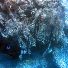 Coral Reef Impacted by Derelict Net