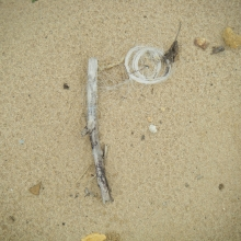 Monofilament fishing line found along the shores of the Chesapeake Bay.