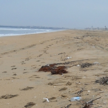 Marine debris found on a sandy beach in Orange County California.