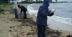 Shoreline Monitoring.