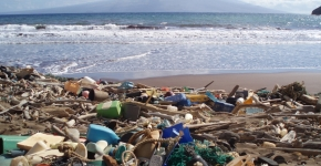 Debris such as plastic detergent bottles, crates, buoys, combs, and water bottles litter a beach.