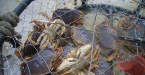 Derelict Dungeness Crab Pot.