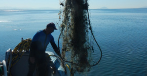 A worker on a boat removing a derelict net from the Puget Sound.
