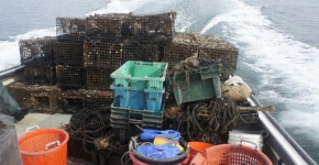 Derelict lobster traps removed from Long Island Sound.