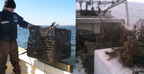 A person holding a derelict crab pot and a pile of derelict crab pots on a boat.