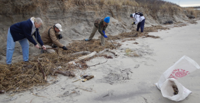 Volunteers inspect a beach for marine debris.
