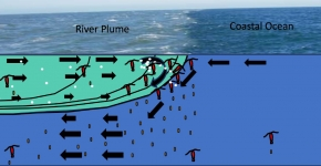 A drawing of where a river outflow meets the ocean. On the left side of the image, the river outflow, also known as a river plum, is lighter in color compared to the right side of the ocean image which is a darker blue.