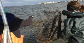 Participants remove a derelict crab pot.