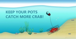 "An illustrated image of a crab in a crab pot with the words ""keep your pots, catch more crab!""."