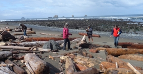 Four people surveying a beach for marine debris.