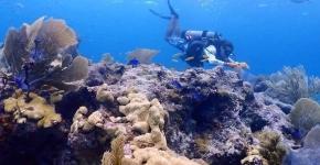 A diver collecting underwater marine debris.