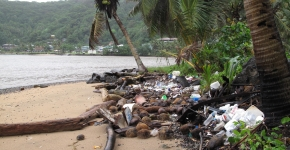 A beach with palm trees, littered with debris.