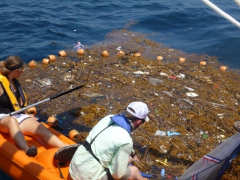 Collecting marine debris in Sargassum. (Photo Credit: USM)