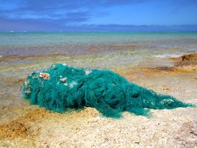 Broken Coral in a Derelict Fishing Net.