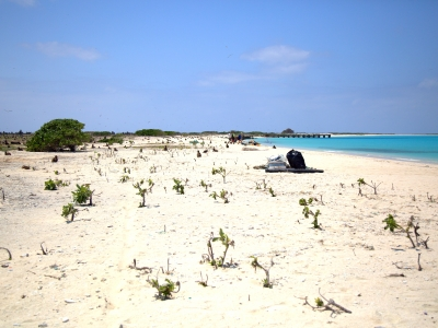 After photo of the western shore of Eastern Island. The debris was bagged up and piled up for pick-up.
