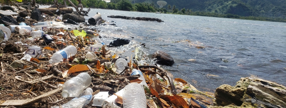 Trash mixed in with natural debris on a shoreline.