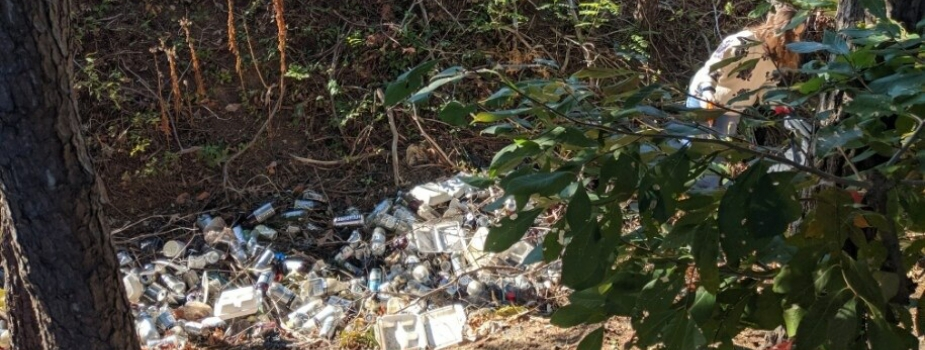 A forest stream littered with plastic debris.