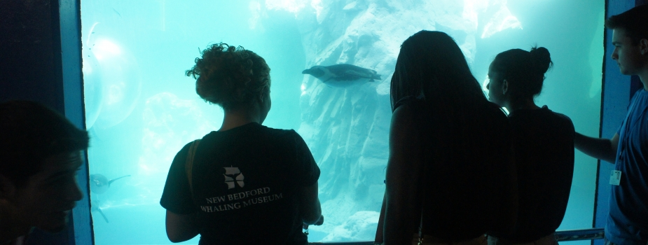 New Bedford & YCC observe a penguin at Mystic Aquarium.