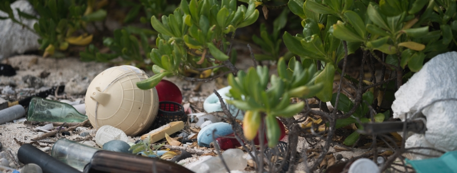 Trash scattered on sand and among shrubs at the back barrier of a beach.