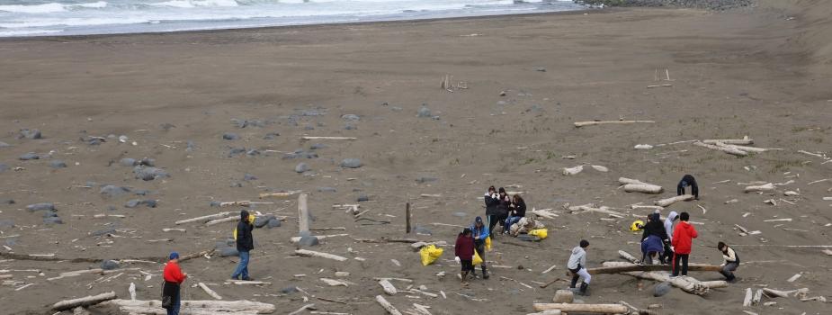 Cleanup volunteers removing debris on a beach.