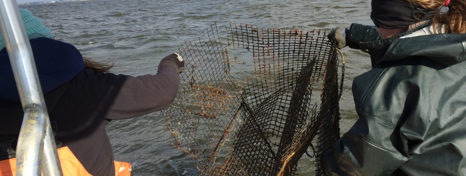 Participants remove a derelict crab pot.