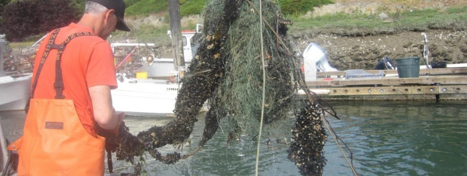 A tangle of green netting is lifted from the water with the support of a machine.