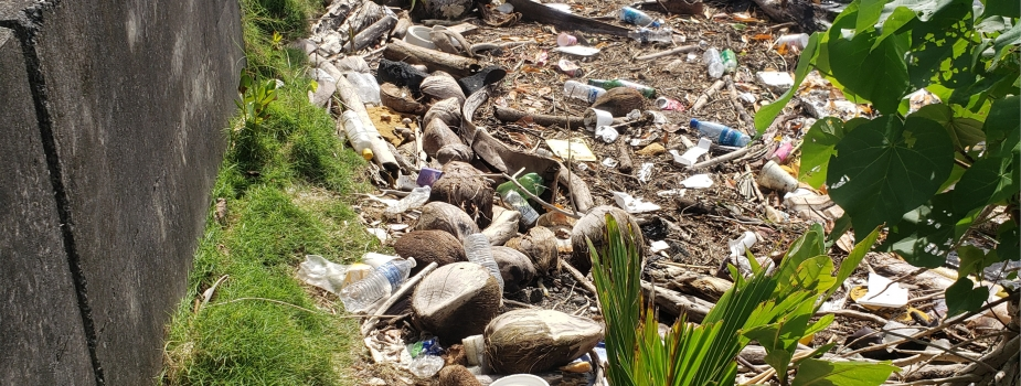 Single-use cups, containers, and other debris along the edge of Pala Lagoon.