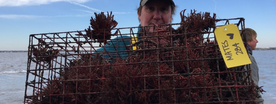 A fisherman holding a derelict crab pot.