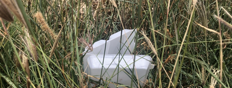 A single-use take-out container in a field of grass.