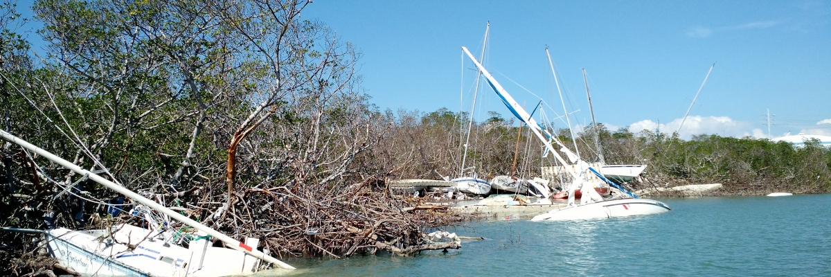 Boats stranded in mangroves.