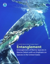 Entanglement of Marine Species in Marine Debris Report.