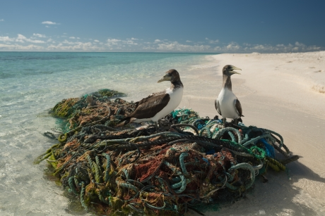 Two seabirds perched on the top of a mess of derelict fishing nets at the water's edge.