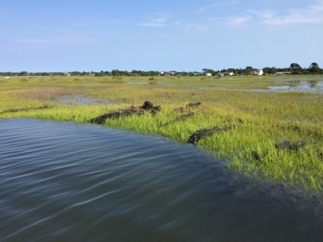 Aquaculture gear such as nets visibly laying within marsh grasses.