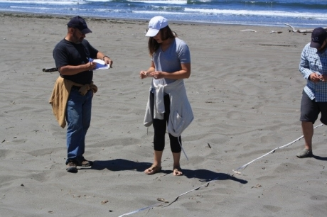 People scanning a beach and recording data on a data sheet on a beach.