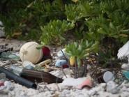 Mixed debris near shrubby vegetation on a beach.