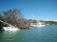 Boats stranded in mangroves.