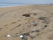 Marine debris on a beach in California.