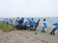 Volunteers pull a derelict vessel out of vegetation.