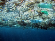 underwater photo looking up through marine debris floating on the surface.
